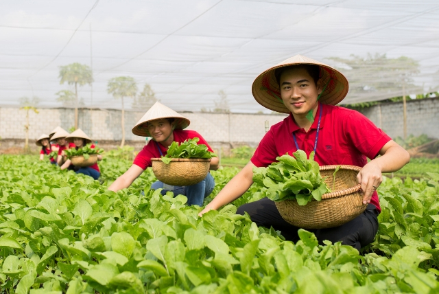 Garment-factory-workers-growing-veggies-for-their-work-lunches.jpg